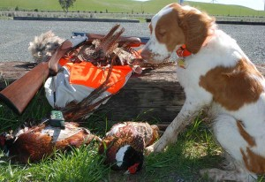 Ziggy's first half of hunt birds.