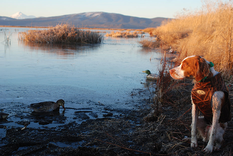 There's something magical about duckhunting in view of snowcapped Mt. Shasta!